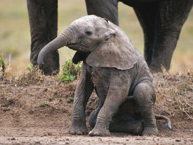 Спасение слоненка в Кении / Доброе видео.
