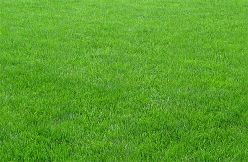 зеленые газоны фото